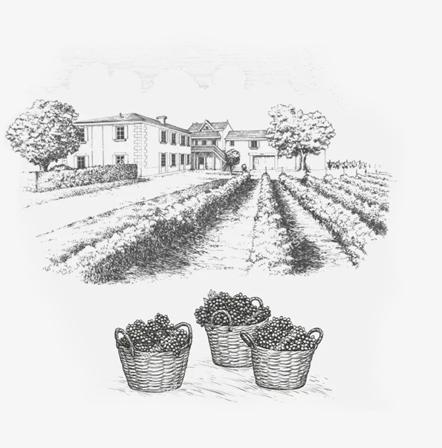 Buy wine, Corney and Barrow wine